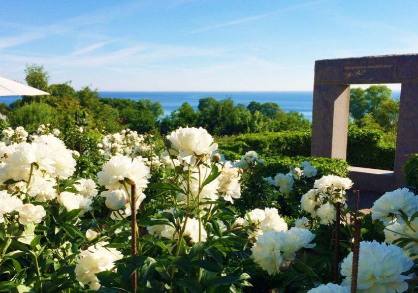 Kiviks-Hotell-pionerna-blommar